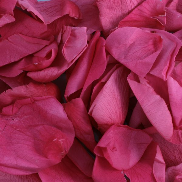 Red Rose Petals for a ashes ceremony