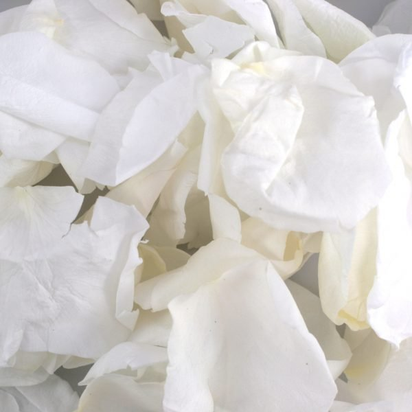 White Rose Petals for a ashes ceremony